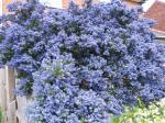 Look! It's very good a lot. The blue flowers are a beautiful.